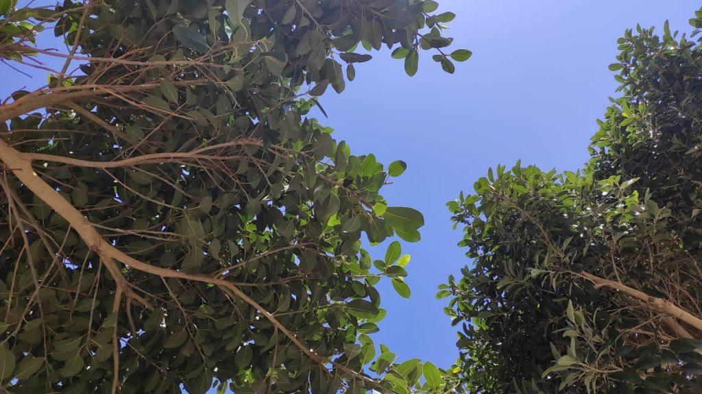 Salento più verde grazie all'intesa tra Provincia, Regione e Arif