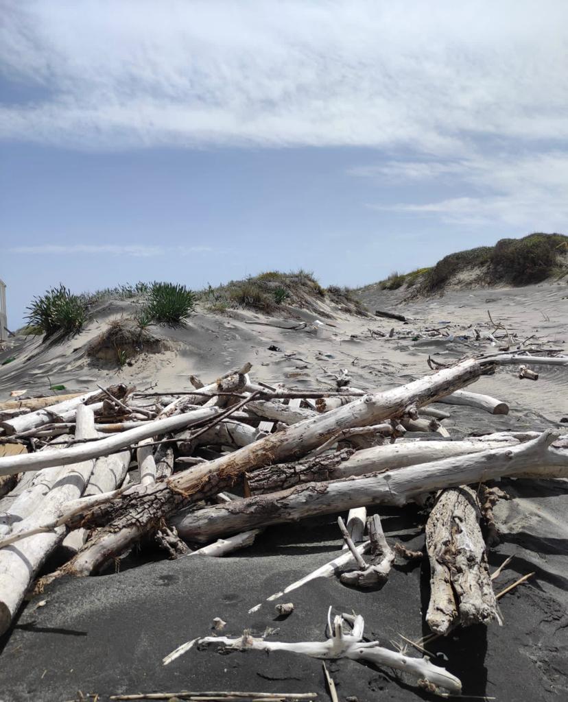 Manutenzione spiagge più semplice: esito positivo dall'incontro Upi Puglia e Regione